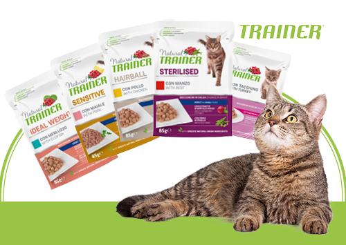 Trainer Cat  Nouveau design et nouveaux produits