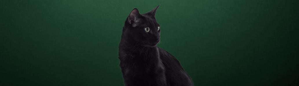 Harmony Cat Deluxe
