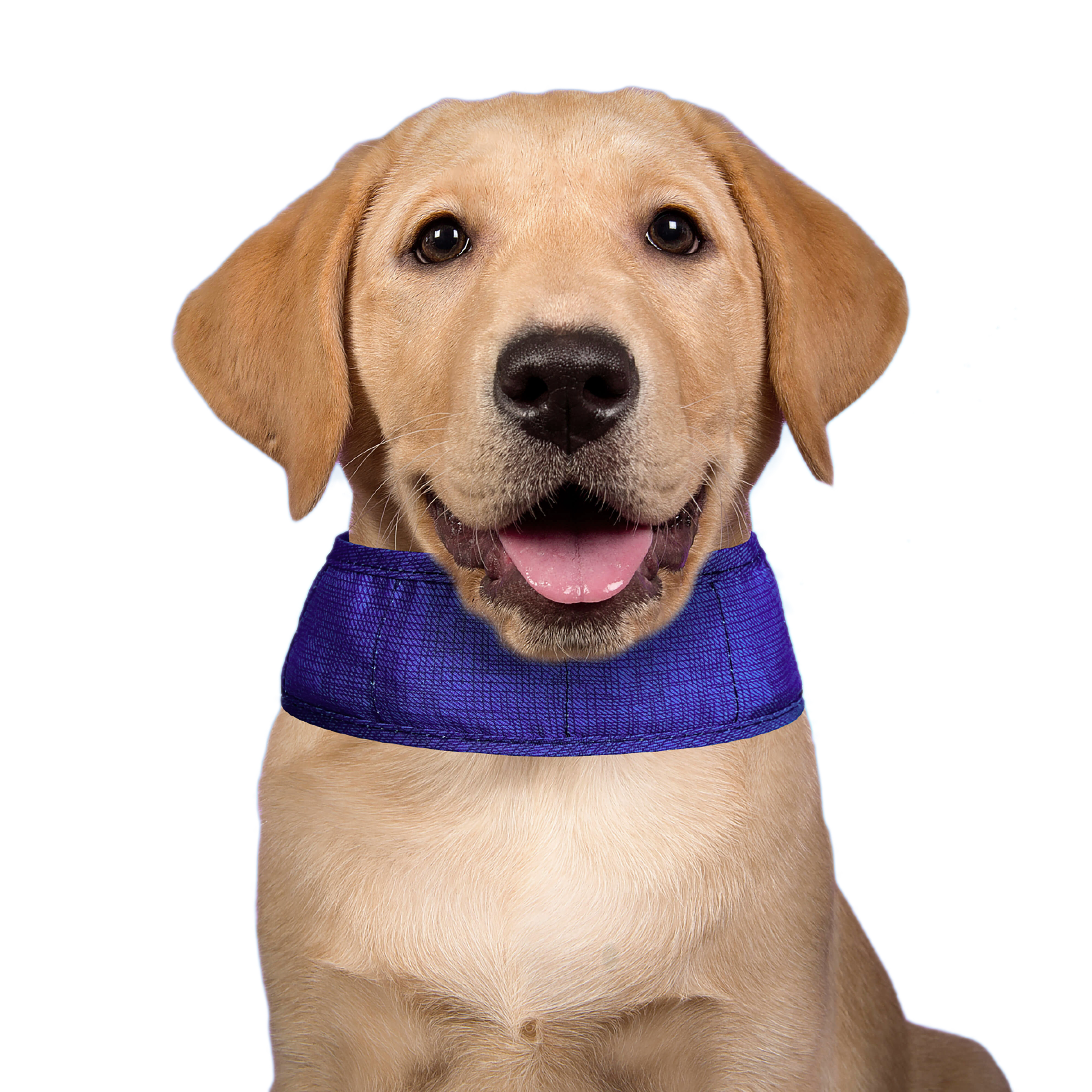 Image of Aqua Coolkeeper Cooling Collar Pacific Blue L