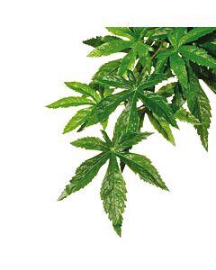 Exo Terra Jungle Plant Abutilon M