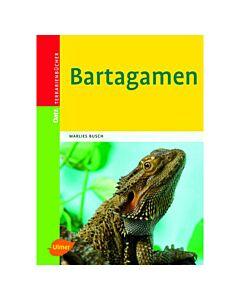Ulmer Bartagamen
