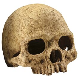 Exo Terra Primate Skull 17x13.5x11.5cm