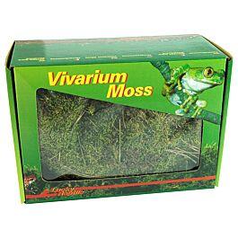 Lucky Reptile Vivarium Moos