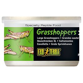 Exo Terra Reptilienfutter Grasshoppers