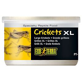 Exo Terra Reptilienfutter Crickets