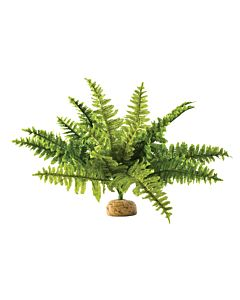 Exo Terra Boston Fern M